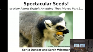 Spectacular Seeds