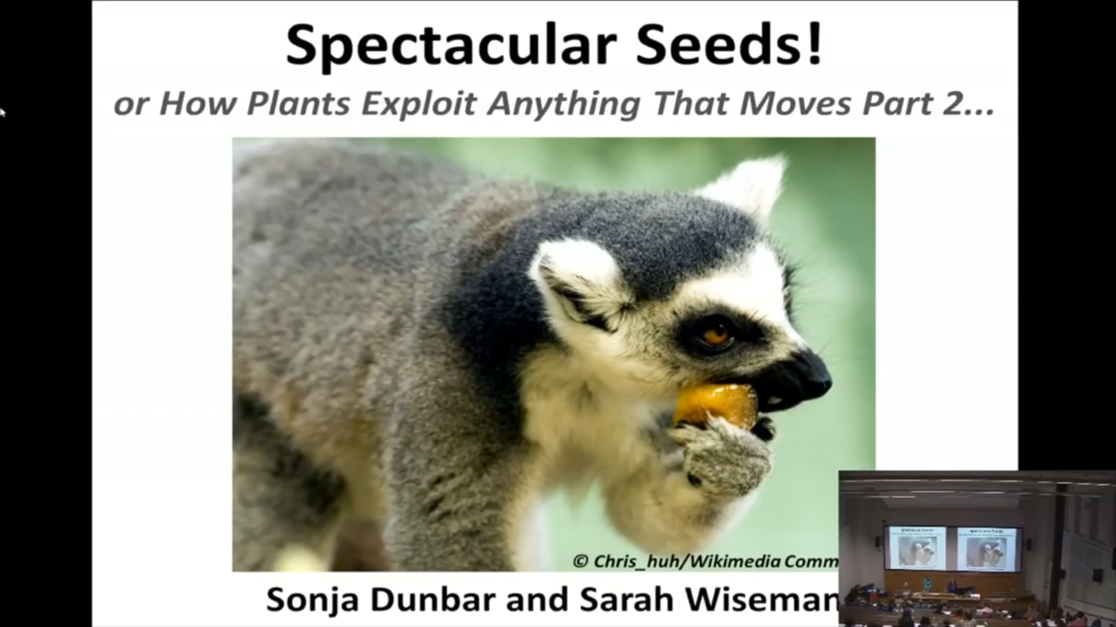 Spectacular Seeds!